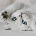 Клуб обожателей кошек