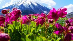 цветы на склоне вулкана