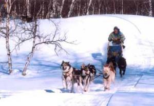 Собаки Хаска