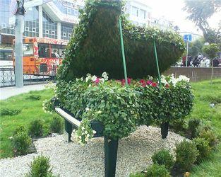 Цветущий рояль Ростов-на-Дону