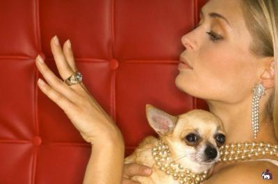 украшения да дамы и собачки