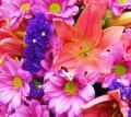 Любовь подобна цветам...