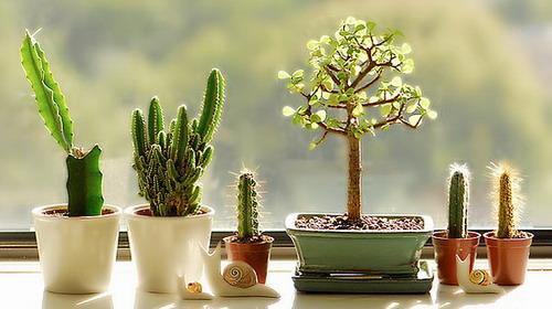 Мини-кактусы