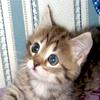 Моя домашняя тигра