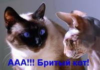Бритый кот 2