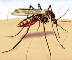 27. Самый лучший репеллент (отпугиватель) для комаров.