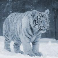 Отметить друзей фотке http vkontakte support