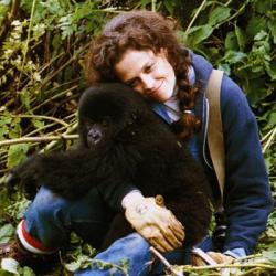 скачать торрент гориллы в тумане